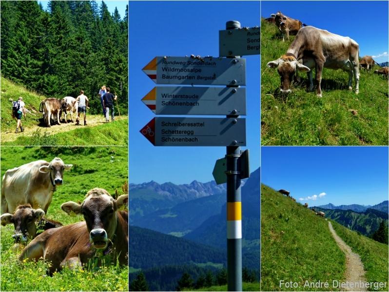 Bregenzerwald - Wandern