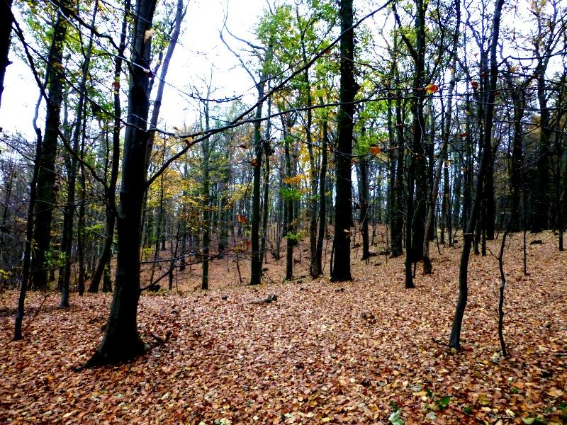 MeerSinn - Tag3 - Granitzer Wald