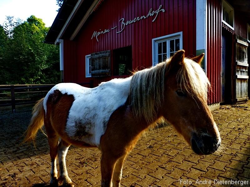 Mainau - Ponny