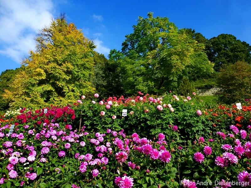Mainau - Blumenmeer