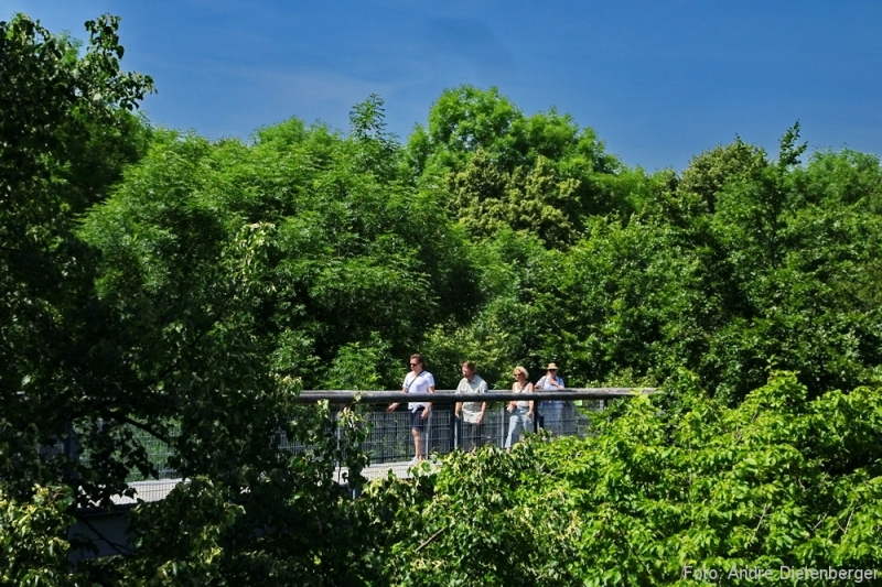 Nationalpark Hainich - Baumkronenpfad