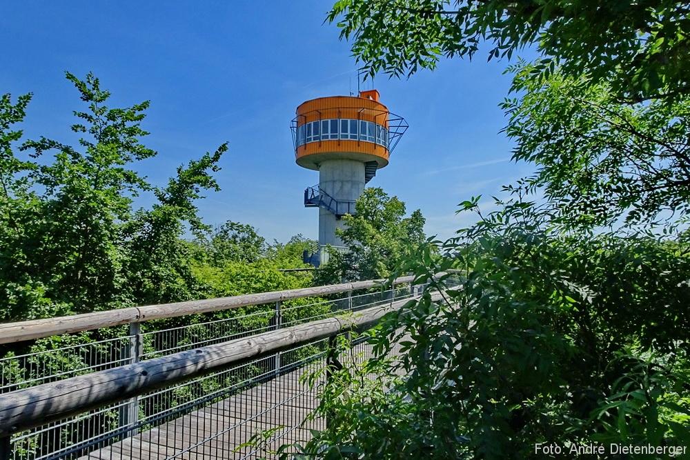 Nationalpark Hainich - Baumkronenpfad Turm