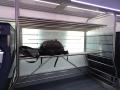ICE 4 Probefahrt - Gepäckregal