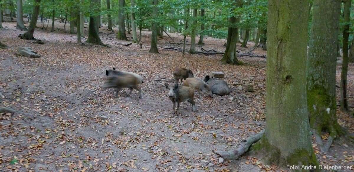 Wildtierpark Edersee