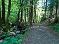 7 Moore Weg - Waldweg