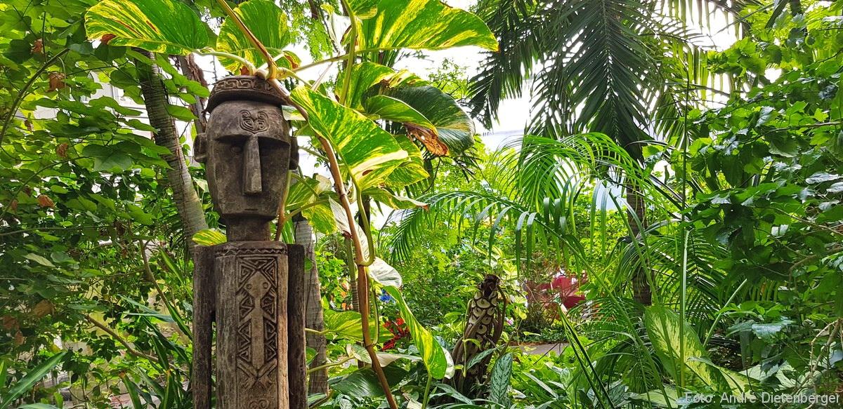 Tropical Islands Regenwald