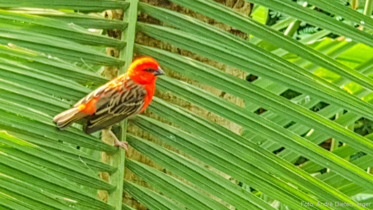 Godwanaland Vogel