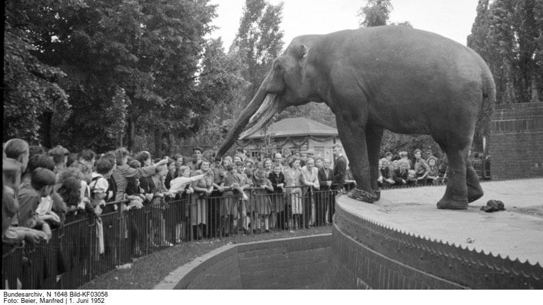 Bundesarchiv N .1648 Bild-KF03058 Foto: Beier, Manfred 1. Juni 1952