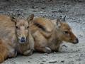 Zoo Wuppertal - Tiere