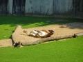 Zoo Wuppertal - feeling good
